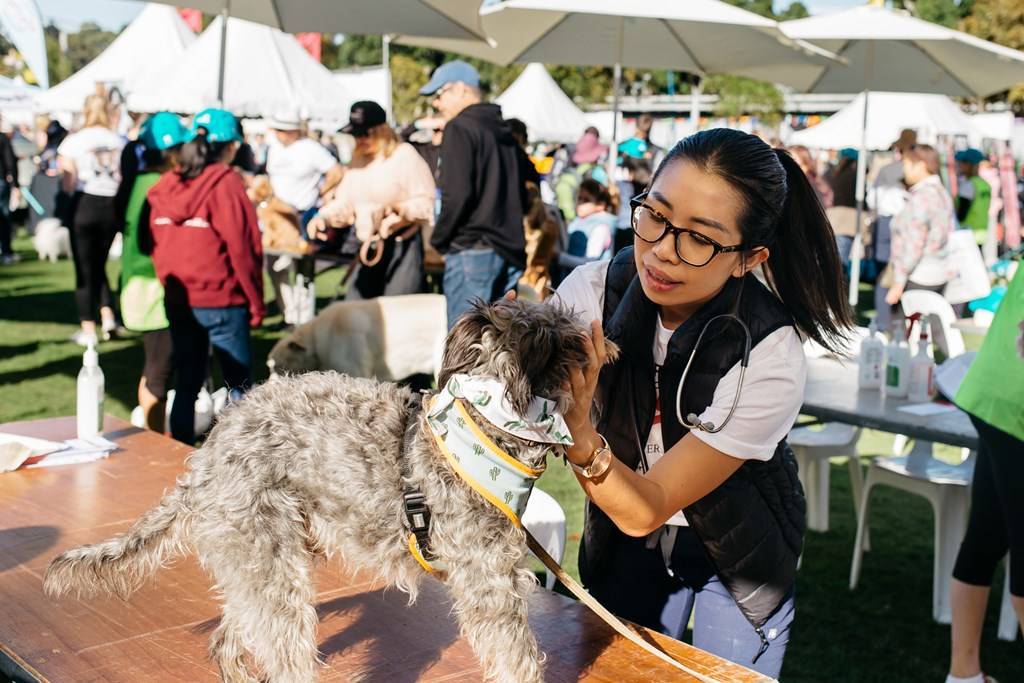 Million Paws Walk 2019