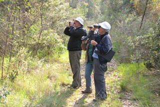 Bird surveys are done by small teams of volunteers