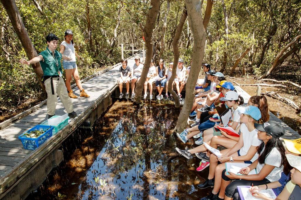 Bicentennial Park Sydney Olympic Park - Secondary School Excursion Program in the Mangroves - Photograph by James Horan