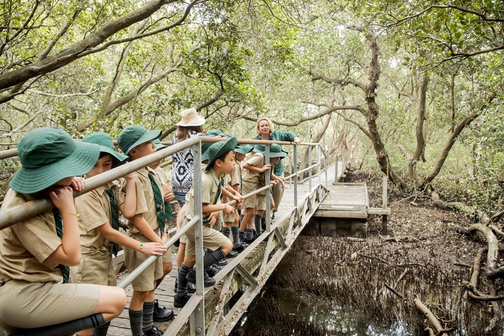 Sydney Olympic Park - Primary school excursion program in the badu mangroves - Photo by James Horan