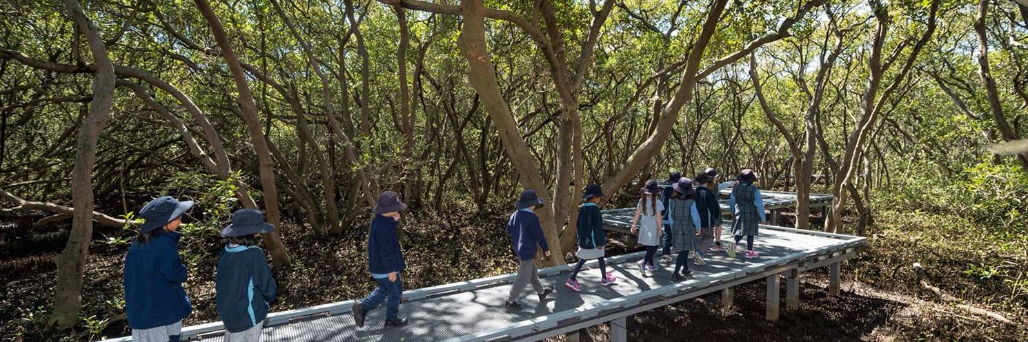 education brochure children walking through mangroves sydney olympic park