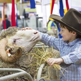 Sydney Showground - Sydney Royal Easter Show - Photo by Paul K Robbins