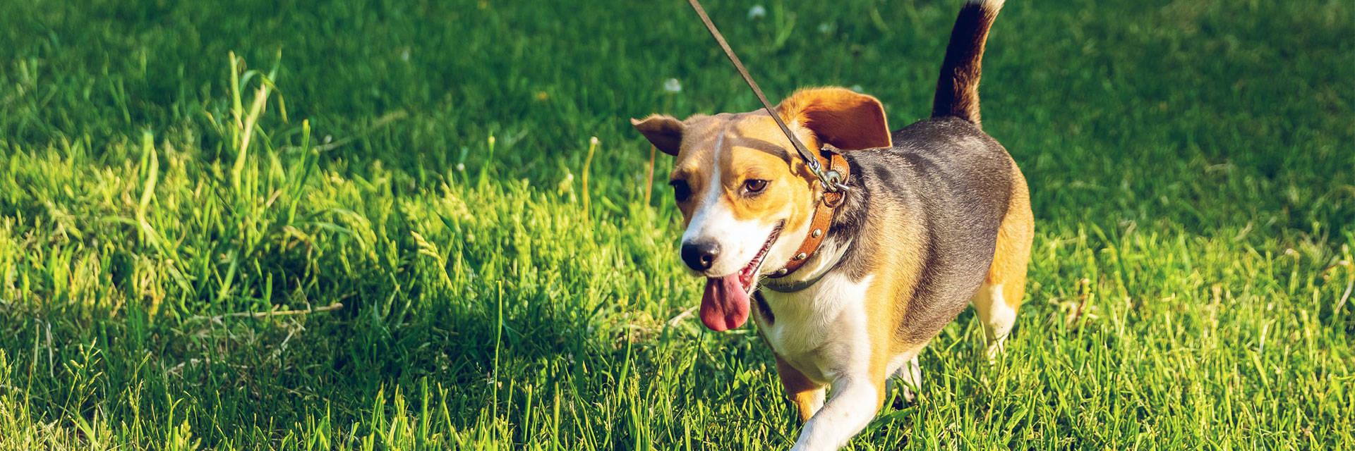 Dog Dog Breeds