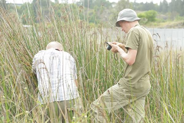 Volunteers searching for wildlife at Sydney Olympic Park